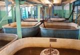 Перспективы рыбного хозяйства в Усольском районе